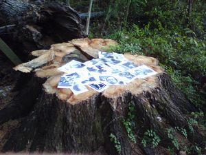 Snapshot Frenzy on Tree Stump