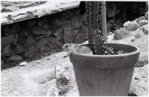 Dog in Pot