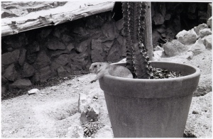 Dog in Pot